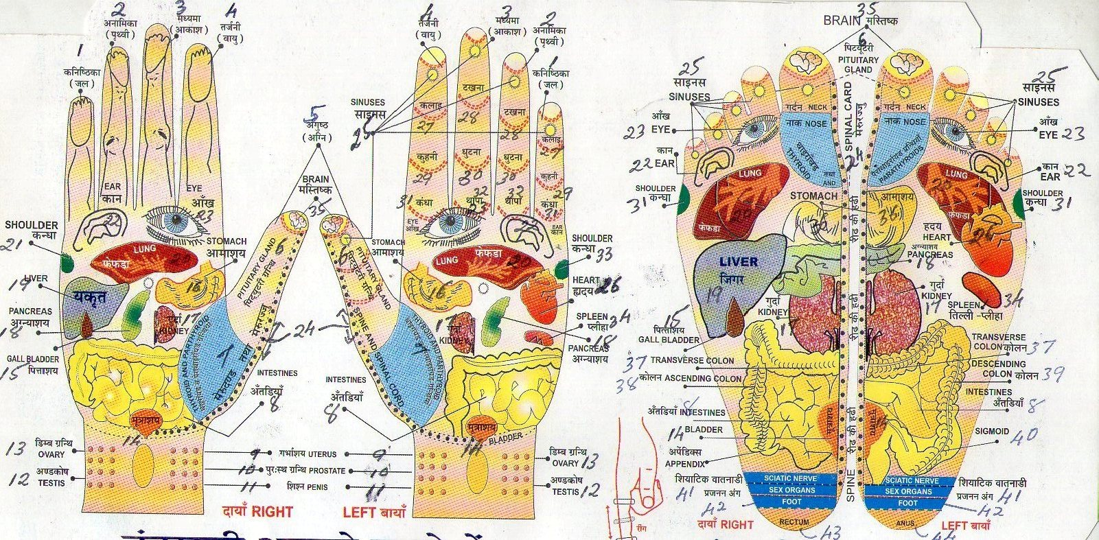 Acupressure : Acupressure points, Reflexology, Meridians